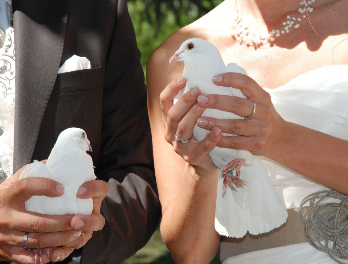 Hochzeitstauben-05