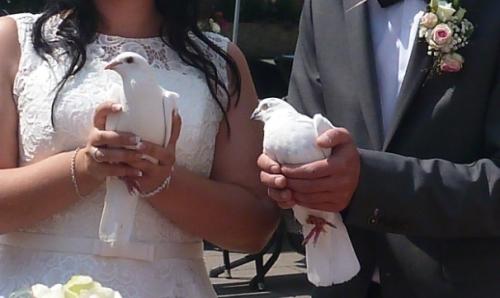 zwei-Hochzeitstauben