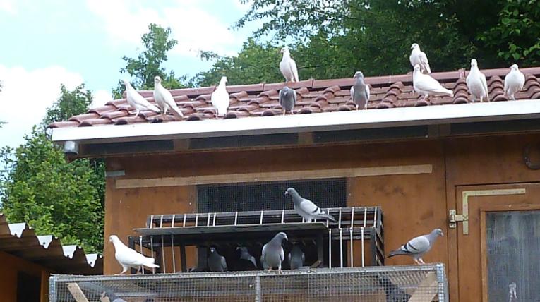 Taubenschlag groß